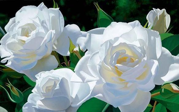 white-roses-flowers-25785316-600-375